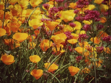 Flowers in Benodet